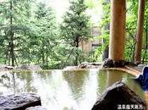 カラマツ、モミの木に囲まれ、開放感たっぷりの源泉100%掛け流し露天風呂