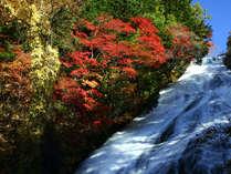 【湯滝(秋)】湯ノ湖の南端にある高さ70メートルの滝