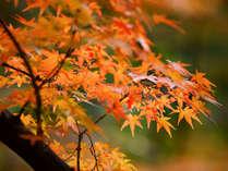 ★自然溢れる磐梯山周辺の『秋の紅葉』は心やすらぎます♪
