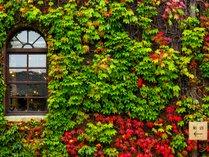 ◆蔦の壁面