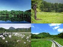 新緑の春、清涼の夏志賀高原