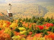 【秋の八甲田】赤や黄色に染まる山々をロープウェイから堪能して