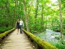 【夏の奥入瀬渓流】すがすがしい空気を胸いっぱいに吸い込んで散策を楽しもう
