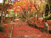 鶏足寺 紅葉