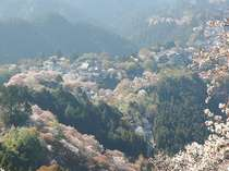 ☆吉野桜と美人湯(洞川温泉)堪能プラン☆[無料・特典]