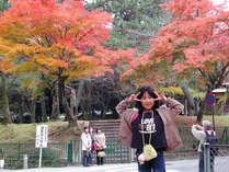 紅葉の奈良公園。当館から徒歩5分。紅葉は例年11月中頃からが見ごろ
