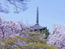 春になると古都は桜や梅の花に彩られます♪