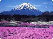 富士桜祭り(4月末から5月)