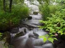 森林浴スポット!御泉水自然園入園券・御泉水につながるゴンドラリフト乗車券付プラン