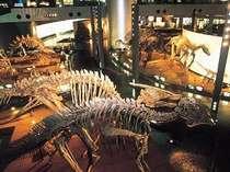 【恐竜パック】感激、感動の声が続出!福井恐竜博物館の入場チケット付