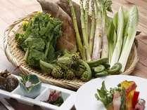 春の旬は山菜!タラの芽、こごみ、うるいなど、売店でも購入可能です!