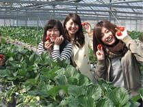 イチゴ狩り@小豆島ふるさと村
