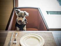 お部屋食ができるのがうれしい、と愛犬も大満足。