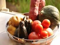 【野菜】自家製野菜で新鮮・安心☆
