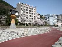 飛騨川河川敷のさんぽ道から望む当館の全景と桜の風景