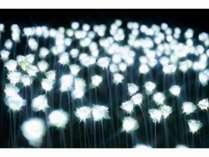 1万本の光るバラ【みろくの里イルミネーション2018】