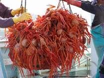 糸魚川はカニの町♪3月からベニズワイガニの漁が始まります。