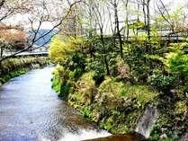 ◆6月・7月限定◆ 夕食軽めでホタル鑑賞へ。初夏の「産山村体験」プラン