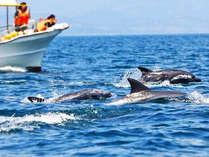 大人気!イルカウォッチングツアー!季節を問わず1年中イルカに会えますよ!