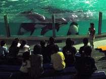 【夜の水族館探検】閉館後の動物を見に行こう!シャチはどうやって寝てるのかな!?