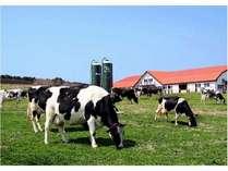 マザー牧場こぶたのレースや乳搾り、羊の行進楽しいことがいっぱい♪