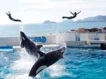 シャチとトレーナーの息の合ったジャンプ!