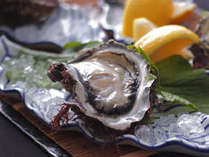 夏が旬の富山湾岩牡蠣