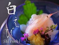 【白海老お造り】「富山湾の宝石」とろりとした甘みとプリプリ感が味わえる白海老のお造り