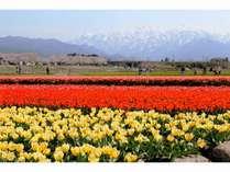 【期間限定】富山にしかない幻想風景・朝日町の春の四重奏がお得に鑑賞できる延楽プラン】