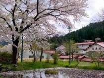 ◆桜の花見部屋プラン!お部屋の目の前が桜並木、夜もライトアップで花見三昧●選べる米沢牛・季節の会席膳