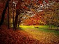 高原の秋を満喫してください♪