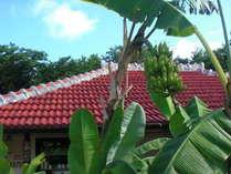 瓦屋とお庭の島バナナが出迎えてくれます