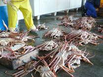 蟹の仕入れ♪身の詰まったおいしい蟹を厳選します。