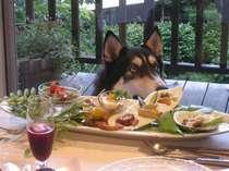 レストランに愛犬同伴出来ます