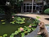 中庭の睡蓮のある池にかわいい金魚が泳いでいます。