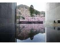 別邸COCOROお風呂から見える河津桜