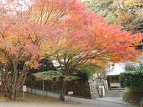 11月下旬、楓の紅葉に包まれます