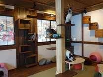 「ねこ処みなみ家」は可愛くて人懐こい猫たちと触れ合えます。毛並みもツルツル♪ご宿泊者様は30分無料!