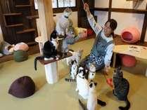 ねこ処みなみ家の猫スタッフたち。お客様に遊んでもらうのが大好きでフレンドリーな全19匹です(=^・^=)