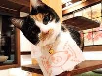 看板猫きぃ 鬼滅の刃バージョン 茶々丸みたいな奇才猫。ねずこの森、竈神社巡りの後に会いに来てね♪