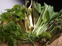【地元名産】自慢の西わらびと山菜は食通をも唸らせる逸品