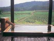 [写真]「ほのか」の客室にある、展望半露天からの眺めは見事