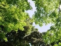 緑葉が広がる新宿御苑