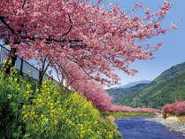 <早春のお気軽桜旅>5組限定!お得♪フレンチディナーで花歩きプラン(夕朝食付)