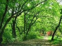 思わず深呼吸を♪緑が美しい宿周辺の散策道♪
