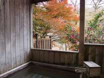 11月下旬、露天風呂(男性)から眺める紅葉