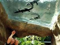 【ゴールデンウィーク】 大人も子どもも楽しめる『熱川バナナワニ園』チケット付きプラン