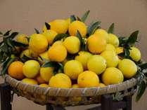 恒例のニューサマーオレンジ&みかんフェアを今年も開催