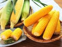 夏限定のとうもろこし「恵味ゴールド」です。甘みが非常に強く、なかなか他では食べられません!