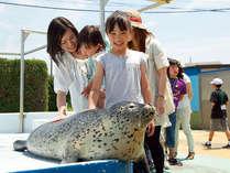 アザラシにタッチ★かわいい海の動物とふれあっちゃいましょう♪